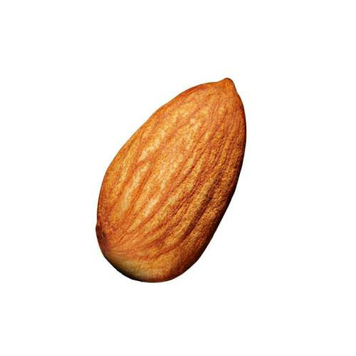 Almond the almond is a species of tree native to mediterranean climate regions of the middle east although it has been introduced elsewhere.