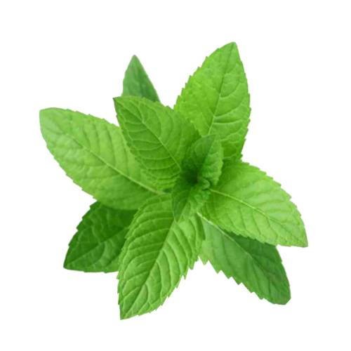 Mint Spearmint spearmint also known as garden mint common mint lamb mint and mackerel mint is a species of mint mentha spicata.