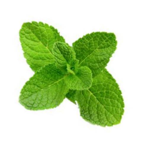 Mint mentha or mint is a genus of plants in the family lamiaceae and is also a herb.